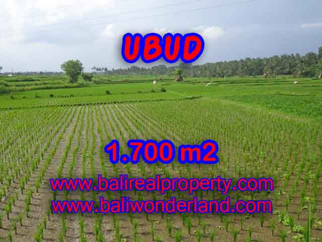 Fantastic Land for sale in Ubud Bali, Garden view and Paddy view in Ubud Center– TJUB398