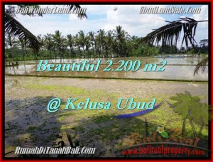 Magnificent 2,200 m2 LAND SALE IN UBUD TJUB475