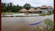 Exotic PROPERTY 350 m2 LAND IN Ubud Tegalalang BALI FOR SALE TJUB476