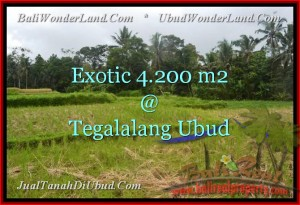 FOR SALE Exotic PROPERTY 4,200 m2 LAND IN UBUD BALI TJUB461