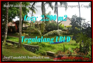 Magnificent 2,200 m2 LAND IN UBUD BALI FOR SALE TJUB462