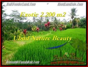FOR SALE Affordable LAND IN Ubud Tegalalang TJUB480