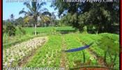 Beautiful PROPERTY LAND SALE IN Ubud Pejeng BALI TJUB452
