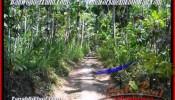 FOR SALE 2.400 m2 LAND IN Ubud Pejeng BALI TJUB454