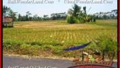 Beautiful PROPERTY LAND SALE IN Ubud Pejeng BALI TJUB456