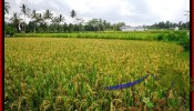 Affordable 1,600 m2 LAND IN UBUD BALI FOR SALE TJUB487