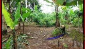 FOR SALE Affordable LAND IN Ubud Tegalalang BALI TJUB489