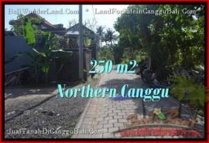 FOR SALE Exotic 250 m2 LAND IN Canggu Pererenan BALI TJCG182