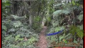 FOR SALE Exotic PROPERTY 11,400 m2 LAND IN UBUD BALI TJUB431