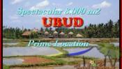 UBUD 8.000 m2 LAND FOR SALE TJUB441