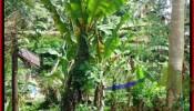 FOR SALE Exotic LAND IN Sentral Ubud BALI TJUB415