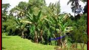 FOR SALE Beautiful 1,600 m2 LAND IN UBUD BALI TJUB416
