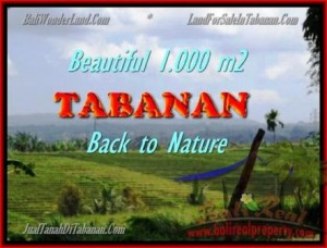 Affordable LAND IN Tabanan Selemadeg BALI FOR SALE TJTB155