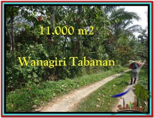 Affordable LAND FOR SALE IN Tabanan Selemadeg BALI TJTB213