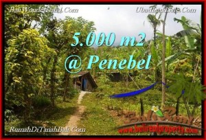 Affordable 5,000 m2 LAND SALE IN TABANAN TJTB215
