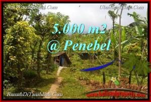 FOR SALE Affordable 5,000 m2 LAND IN TABANAN TJTB215