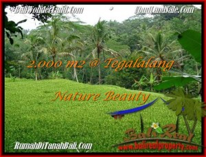 FOR SALE Magnificent 2,000 m2 LAND IN UBUD BALI TJUB490