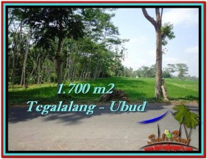 Magnificent PROPERTY 1,700 m2 LAND FOR SALE IN Ubud Tegalalang TJUB518