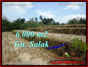 FOR SALE Beautiful LAND IN Tabanan Selemadeg BALI TJTB221