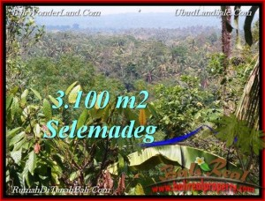 Magnificent PROPERTY 3,100 m2 LAND FOR SALE IN Tabanan Selemadeg TJTB222