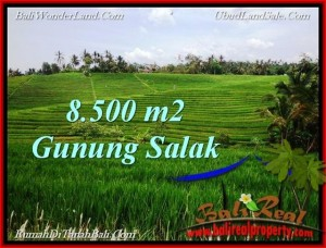 Beautiful PROPERTY 8,500 m2 LAND IN Tabanan Selemadeg FOR SALE TJTB223