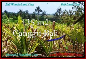 Magnificent 435 m2 LAND FOR SALE IN CANGGU TJCG196