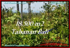 Magnificent PROPERTY 18,500 m2 LAND FOR SALE IN Tabanan Selemadeg TJTB232