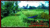 FOR SALE Affordable LAND IN Ubud Tegalalang BALI TJUB497