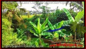 Magnificent LAND FOR SALE IN UBUD TJUB497