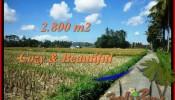 Affordable PROPERTY 2,800 m2 LAND FOR SALE IN Ubud Pejeng TJUB498