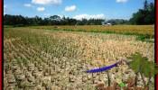 Beautiful PROPERTY 2,800 m2 LAND SALE IN Ubud Pejeng TJUB498