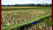 LAND SALE IN Ubud Pejeng BALI TJUB498