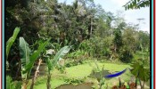 Exotic PROPERTY Ubud Tampak Siring 10,000 m2 LAND FOR SALE TJUB519