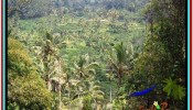 Magnificent PROPERTY 12,000 m2 LAND SALE IN Ubud Tampak Siring TJUB520