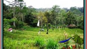 FOR SALE Beautiful PROPERTY 2,800 m2 LAND IN Ubud Tampak Siring TJUB521