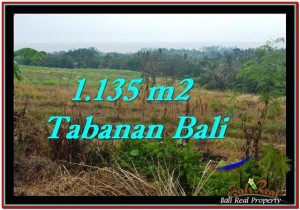 Exotic 1,135 m2 LAND IN TABANAN BALI FOR SALE TJTB253