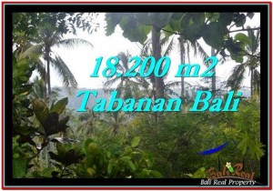 Beautiful PROPERTY 18,200 m2 LAND IN Tabanan Selemadeg FOR SALE TJTB254