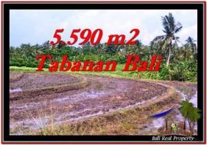 Affordable PROPERTY LAND FOR SALE IN TABANAN TJTB257