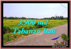 Exotic 3,900 m2 LAND FOR SALE IN TABANAN BALI TJTB258