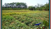 Magnificent PROPERTY LAND FOR SALE IN UBUD BALI TJUB527