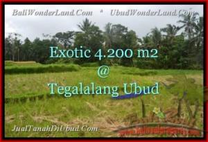 Affordable LAND SALE IN Ubud Tegalalang BALI TJUB461