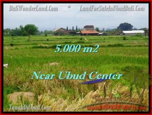 Affordable PROPERTY 5,000 m2 LAND SALE IN UBUD BALI TJUB474
