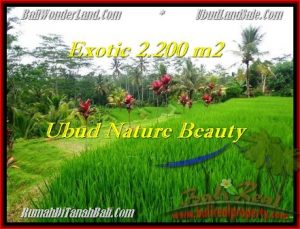 Beautiful PROPERTY Ubud Tegalalang 2,200 m2 LAND FOR SALE TJUB480
