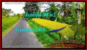 FOR SALE Beautiful PROPERTY 700 m2 LAND IN Ubud Tegalalang TJUB497