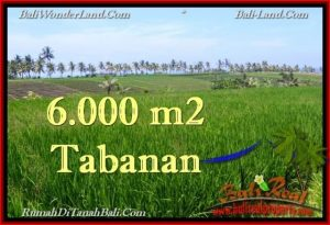 Beautiful LAND FOR SALE IN TABANAN TJTB267