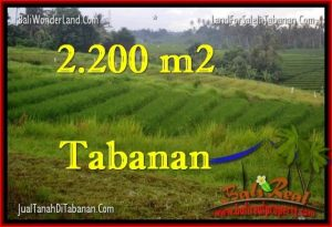 Magnificent 2,200 m2 LAND IN TABANAN BALI FOR SALE TJTB269