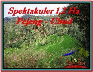 Beautiful PROPERTY 12,000 m2 LAND FOR SALE IN Ubud Tampak Siring BALI TJUB520