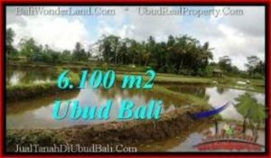 Beautiful 6,100 m2 LAND IN Ubud Pejeng FOR SALE TJUB547