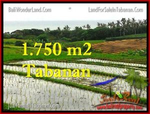 Magnificent PROPERTY LAND IN TABANAN FOR SALE TJTB264