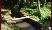 Exotic PROPERTY LAND SALE IN UBUD BALI TJUB548